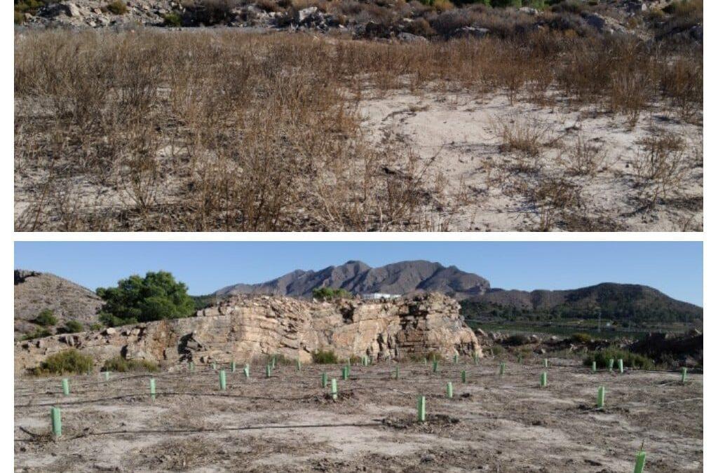 AFAREM y ARBA hacen la primera plantación en la cantera abandonada de Los Ásperos 2 FRECOM