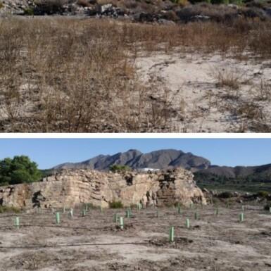 AFAREM y ARBA hacen la primera plantación en la cantera abandonada de Los Ásperos 5 FRECOM